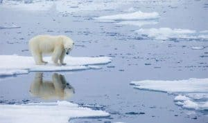 Iconic image of a polar bear on thin ice