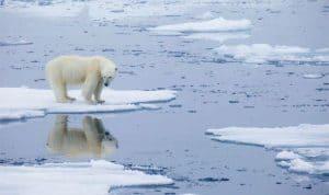 Iconic image of a polar bear on thin ice